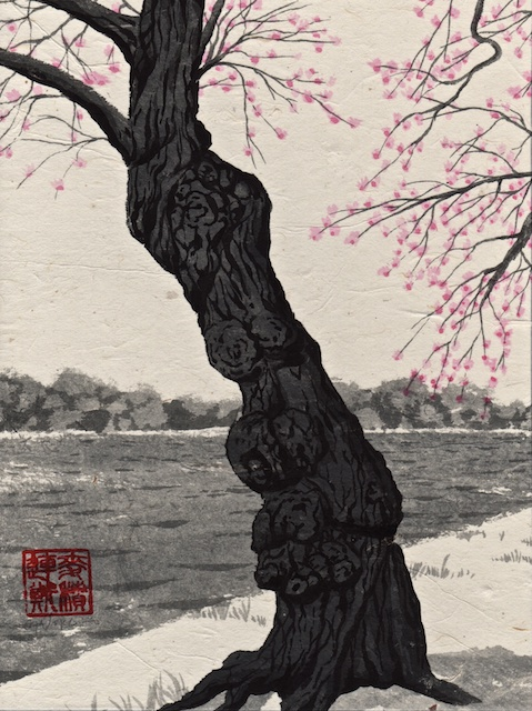Cherry Trees #10, Washington DC, hand-ground black ink with acrylic wash, mulberry paper mounted on Claybord, 2013, Mark W. McGinnis