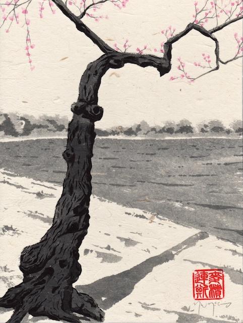 cherry trees #6
