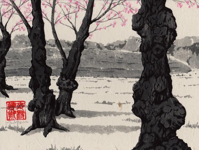 cherry trees #7
