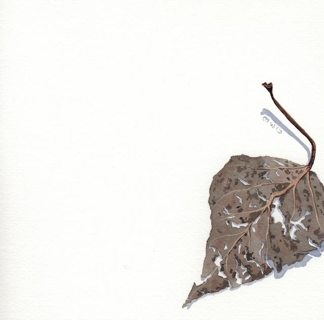 21 poplar leaves 400 - 2013-11-05 at 10-52-22
