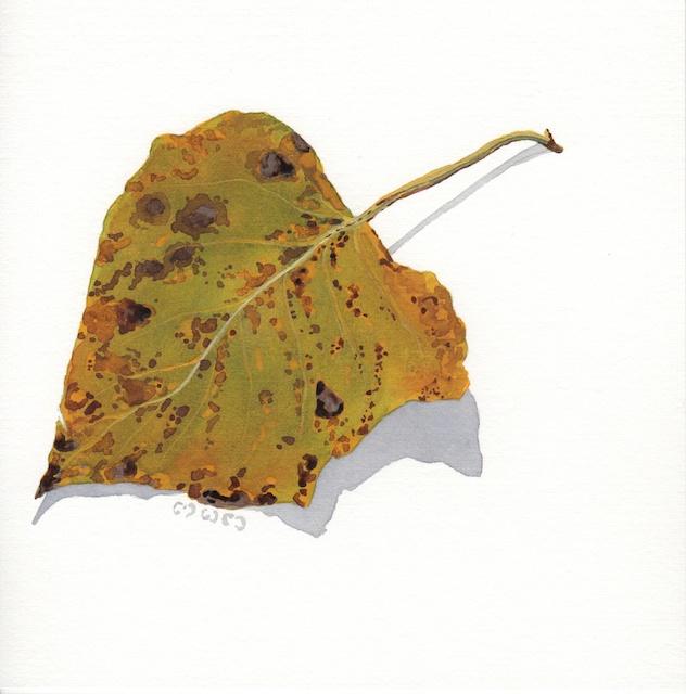 polar leaves 12 - 2013-10-26 at 16-09-39