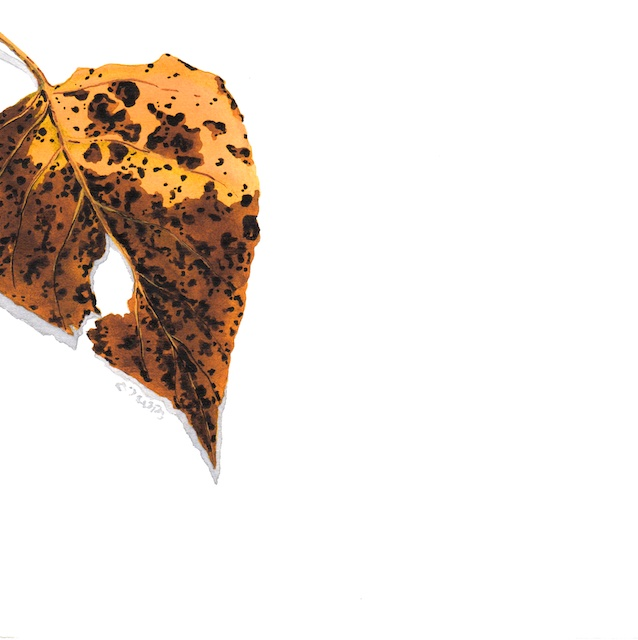 polar leaves 16 - 2013-10-26 at 16-16-07