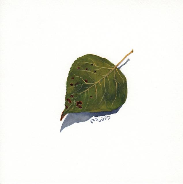 poplar leaves 1 - 2013-10-16 at 14-46-37