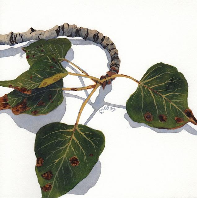 poplar leaves 2 - 2013-10-16 at 14-48-14
