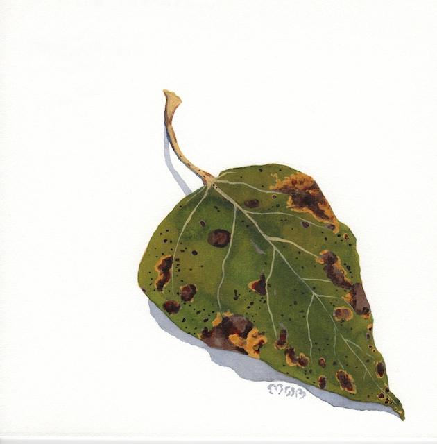 poplar leaves 3 - 2013-10-16 at 14-50-54