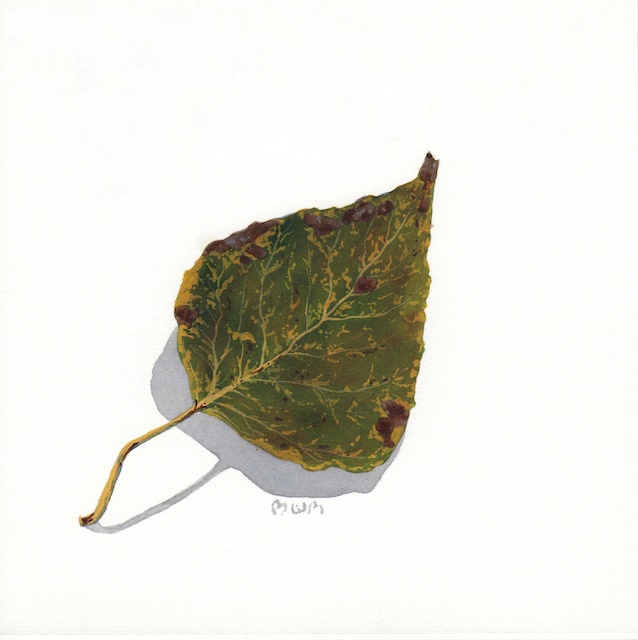 poplar leaves 6 - 2013-10-16 at 14-56-17