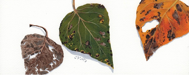 poplar leaves cover image - 2013-11-01 at 15-43-13