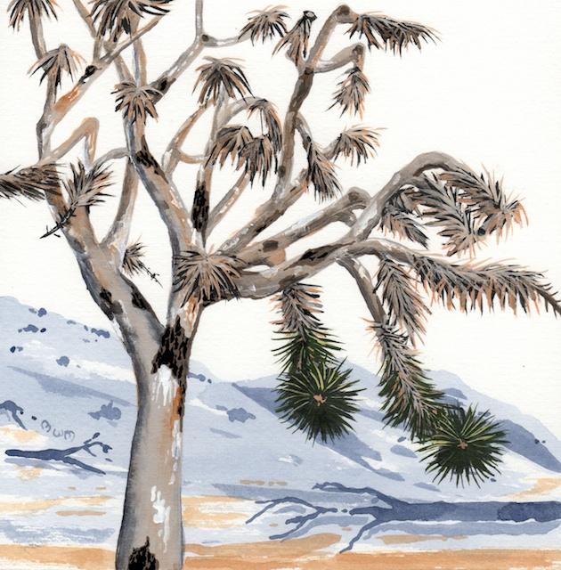 joshua tree - burned joshua tree - 2014-02-10 at 13-25-49