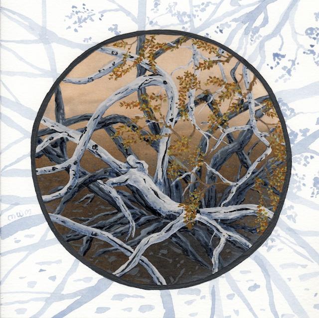 joshua tree - creosote bush branches   - 2014-02-10 at 13-55-26