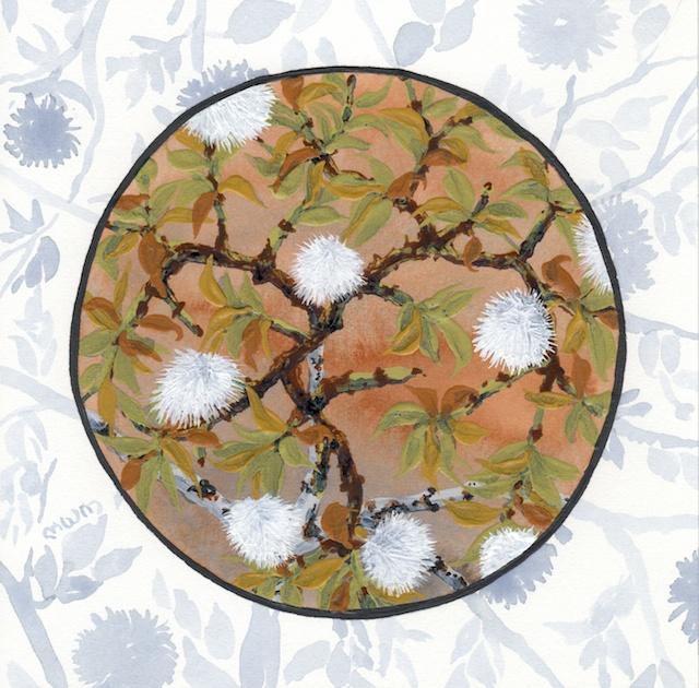 joshua tree - creosote bush seed puffs - 2014-02-10 at 13-57-13