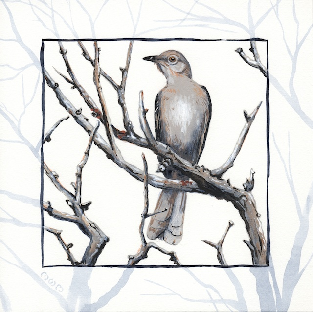 joshua tree - desert mockingbird - 2014-01-22 at 11-01-13