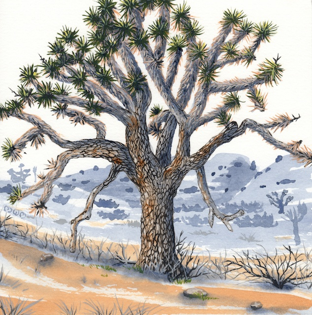 joshua tree - elder joshua tree - 2014-02-10 at 13-23-35