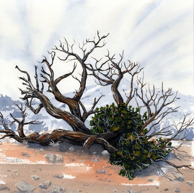 joshua tree - Juniper tree - 2014-02-10 at 13-37-28