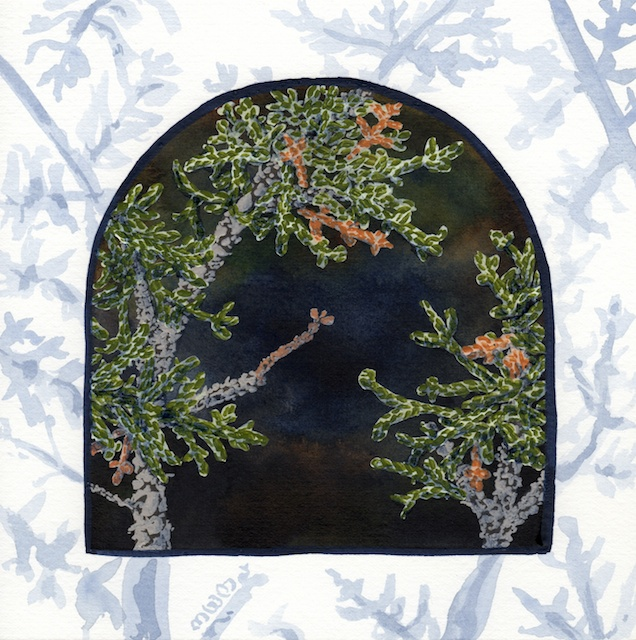 joshua tree - Juniper tree foliage  - 2014-02-10 at 13-40-37