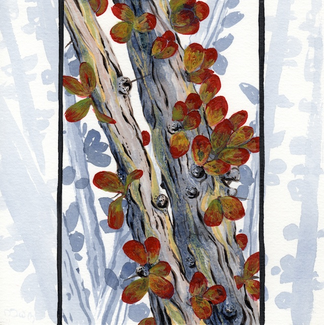 joshua tree - octotillo leaves  - 2014-02-10 at 13-51-09