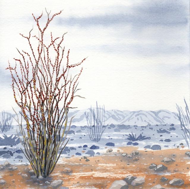 joshua tree - octotillo plant  - 2014-02-10 at 13-47-05