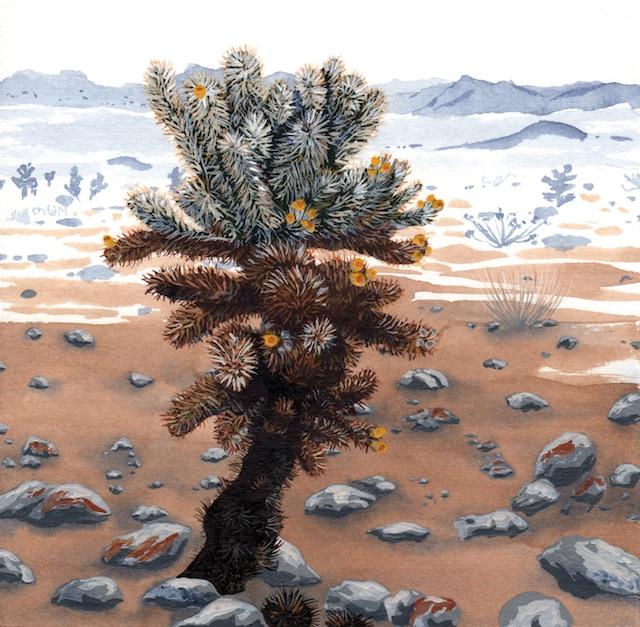 joshua tree - pinto basin - cholla cactus - 2014-01-22 at 11-08-47