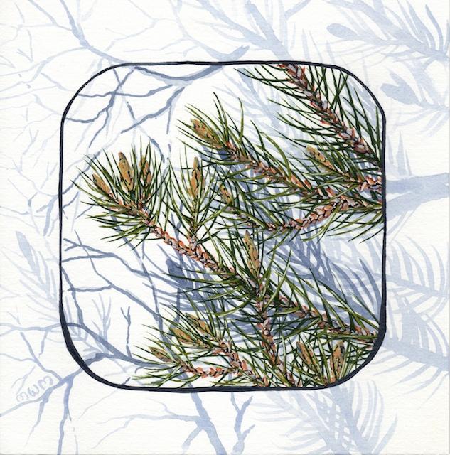joshua tree - pinyon pine needles - 2014-02-10 at 13-35-18