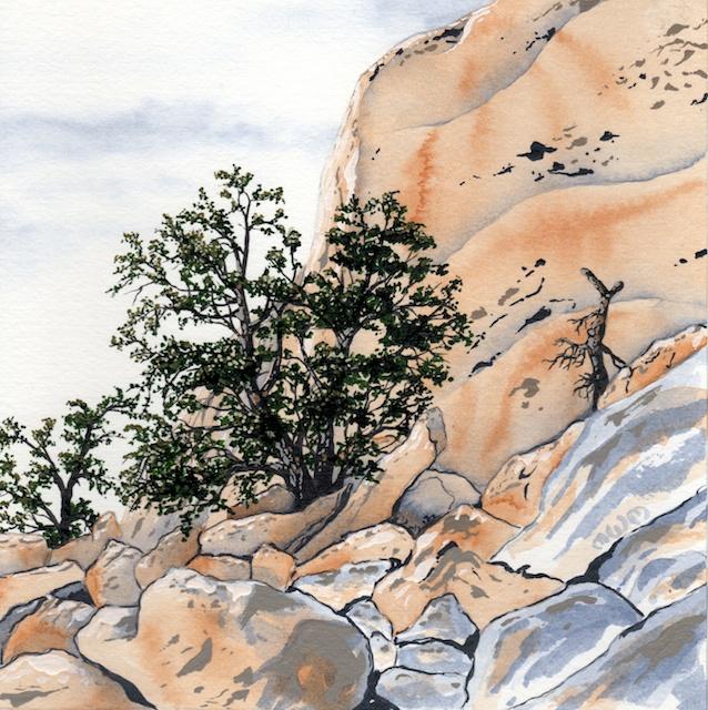 joshua tree - pinyon pines - 2014-02-10 at 13-31-05