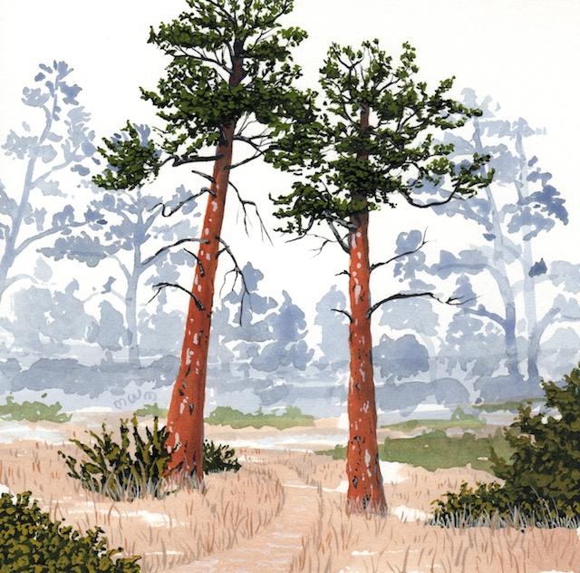 ponderosa pine 10 - 2014-03-14 at 15-52-50