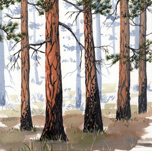 ponderosa pine 14 - 2014-03-14 at 15-20-26