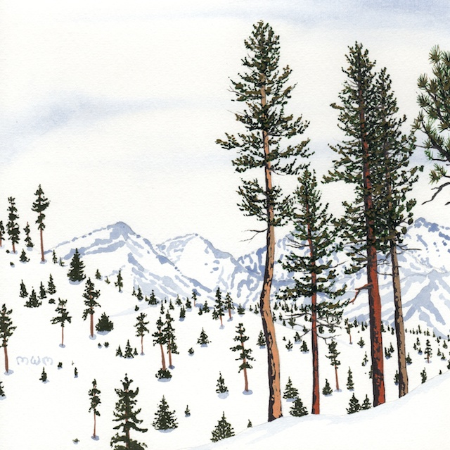 ponderosa pine 17 - 2014-03-14 at 14-59-12
