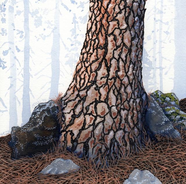 ponderosa pine 21 - 2014-03-14 at 14-38-21