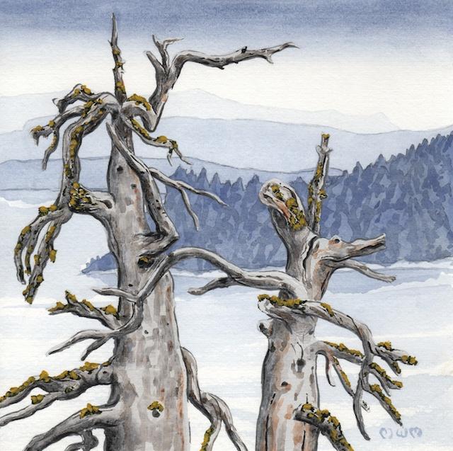 ponderosa pine 23 - 2014-03-14 at 14-21-40
