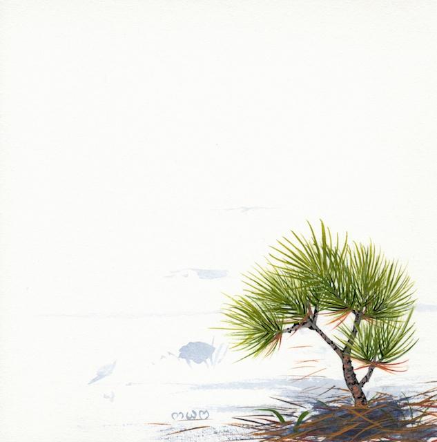 ponderosa pine 4 - 2014-03-14 at 16-28-40