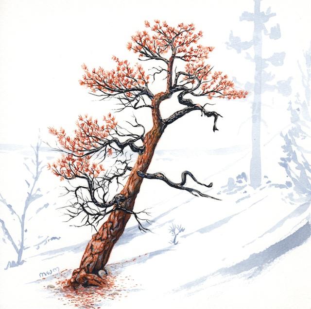 ponderosa pine 5 - 2014-03-14 at 16-24-39