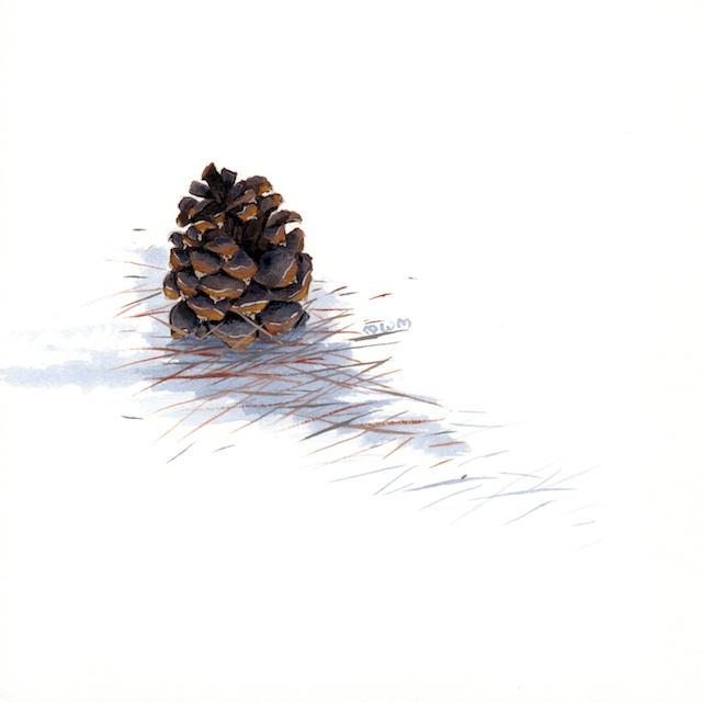 ponderosa pine 6 - 2014-03-14 at 16-19-34