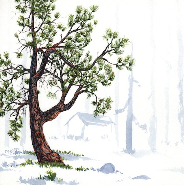 ponderosa pine 9 - 2014-03-14 at 15-57-47