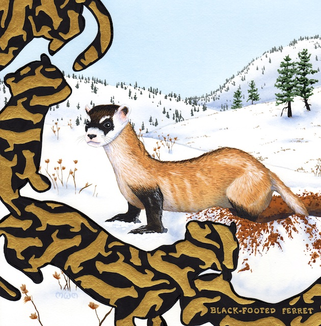 "Black-footed Ferret, 12"" X 12"", acrylic on paper, 2015, Mark W.McGinnis"