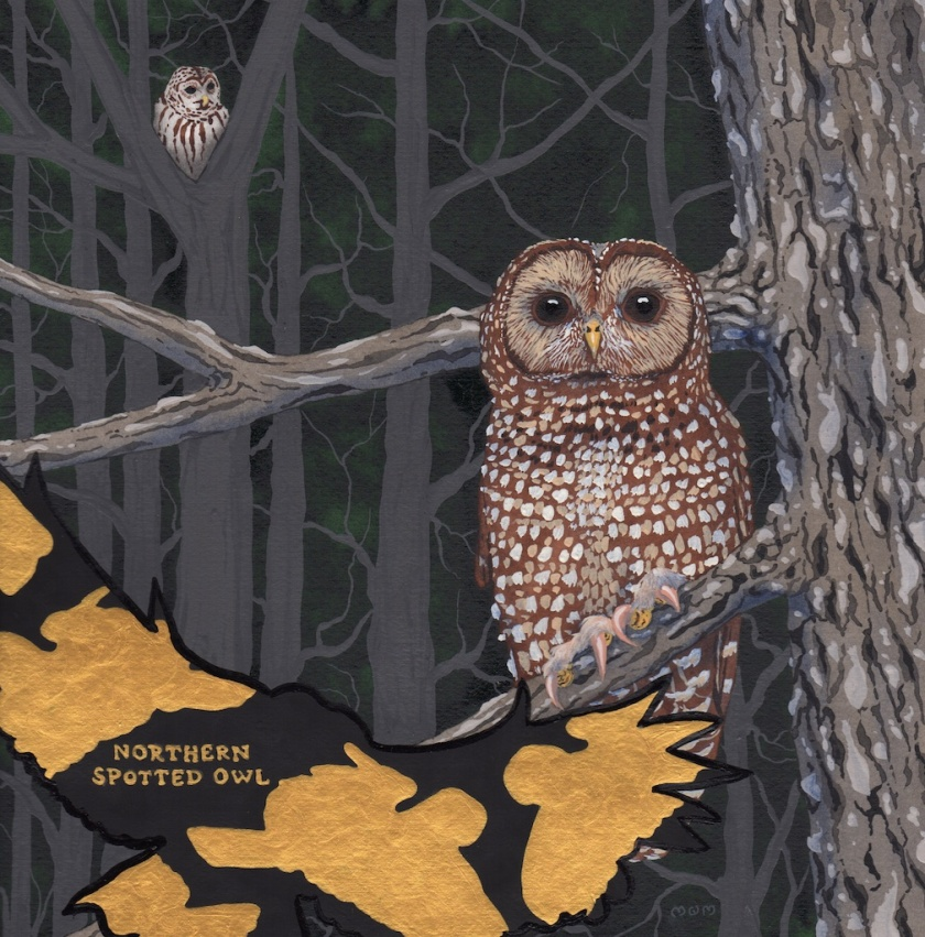 extinct - northern spotted owl - 2015-12-12 at 11-11-32