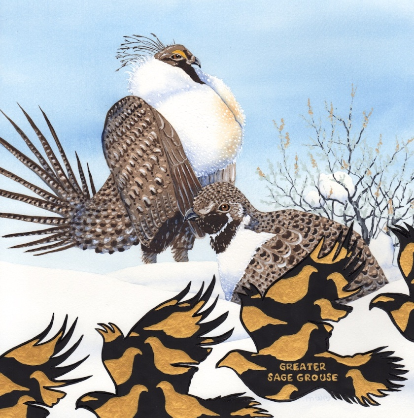 extinct - sage grouse - 2015-12-05 at 11-58-59